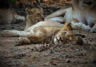 Wieso du ein eine afrikanische Safari machen solltest