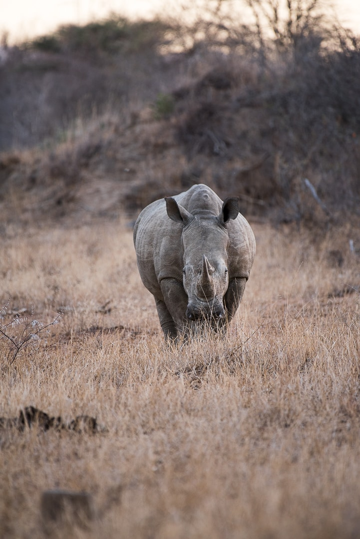 safari in südafrika big five
