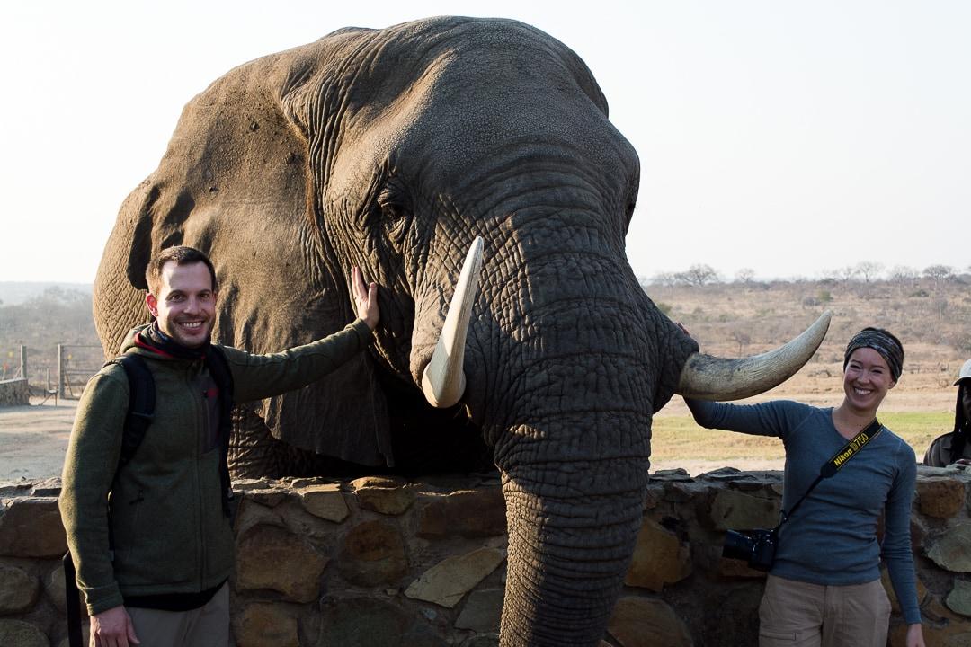 safari in südafrika elefant