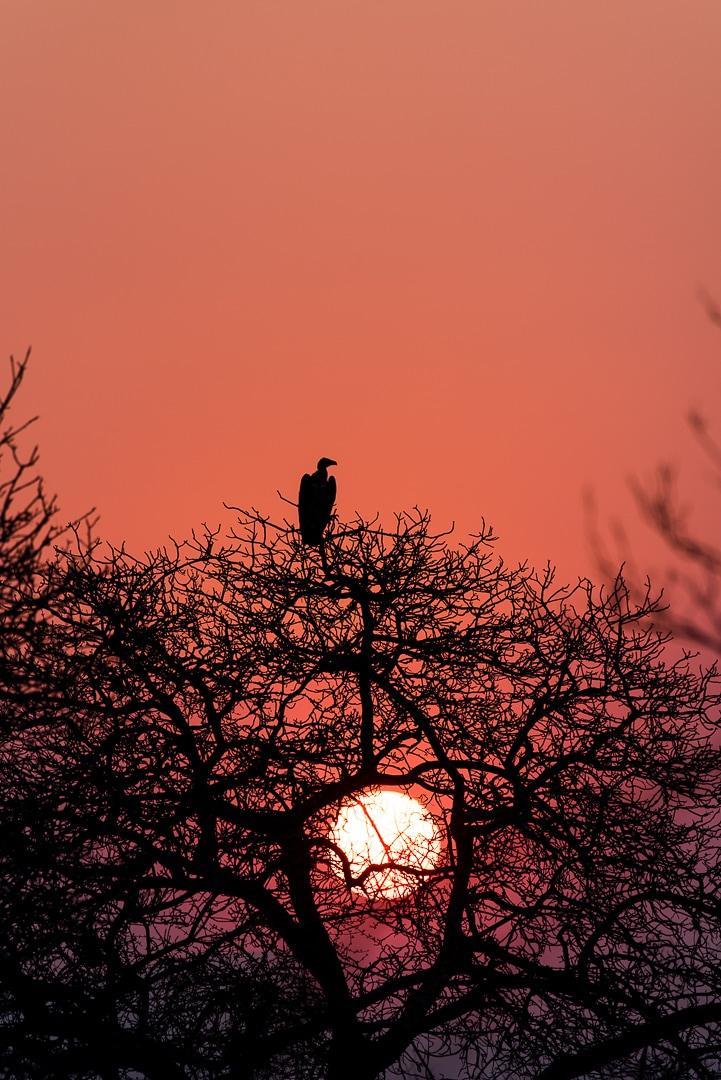 safari in südafrika sonnenuntergang