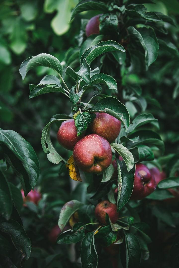 Apfel-Hefe-Teilchen